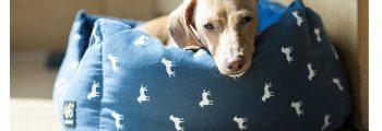 Checkliste: Grundausstattung für den Hund
