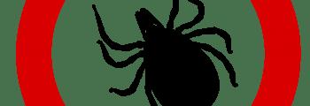 SOS – Zeckenalarm! Was hilft wirklich gegen Zeckenbefall [2]
