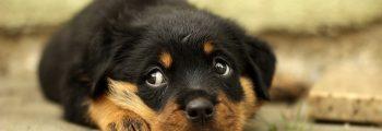 Hilfe – Ich habe einen Hund!