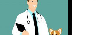 Tierarzt – Die Wahl der Qual